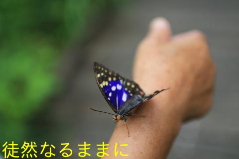 d0285540_06320633.jpg