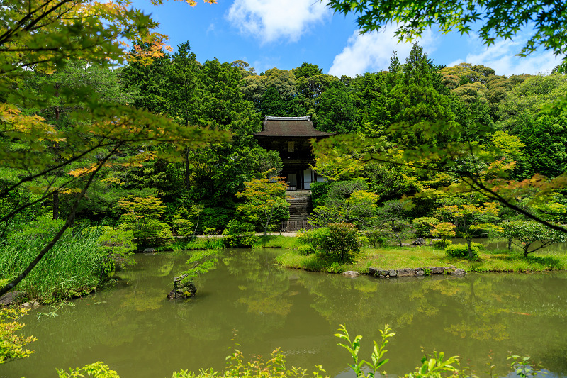 睡蓮の池(忍辱山町・圓成寺)_f0155048_23164973.jpg