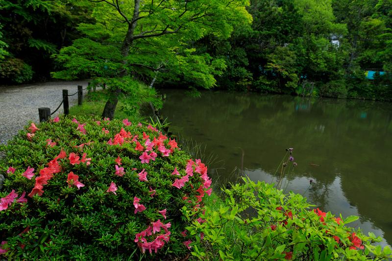 睡蓮の池(忍辱山町・圓成寺)_f0155048_23171890.jpg