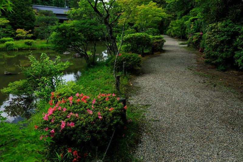 睡蓮の池(忍辱山町・圓成寺)_f0155048_2317349.jpg