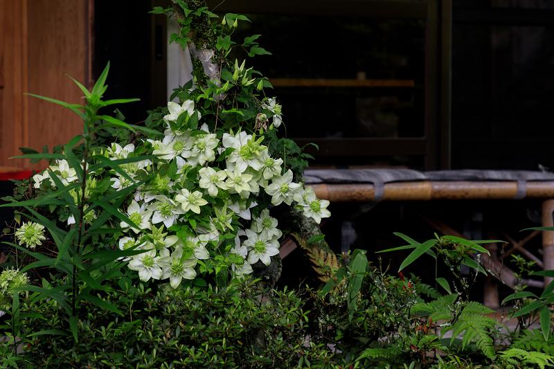 睡蓮の池(忍辱山町・圓成寺)_f0155048_2317730.jpg