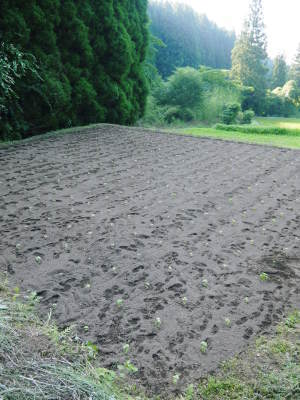 無農薬栽培の白エゴマ油『ピュアホワイト』令和元年度の白エゴマの定植をスタートしました!_a0254656_19174614.jpg