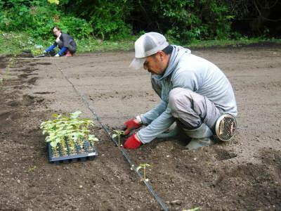 無農薬栽培の白エゴマ油『ピュアホワイト』令和元年度の白エゴマの定植をスタートしました!_a0254656_19190464.jpg