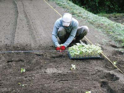 無農薬栽培の白エゴマ油『ピュアホワイト』令和元年度の白エゴマの定植をスタートしました!_a0254656_19193571.jpg
