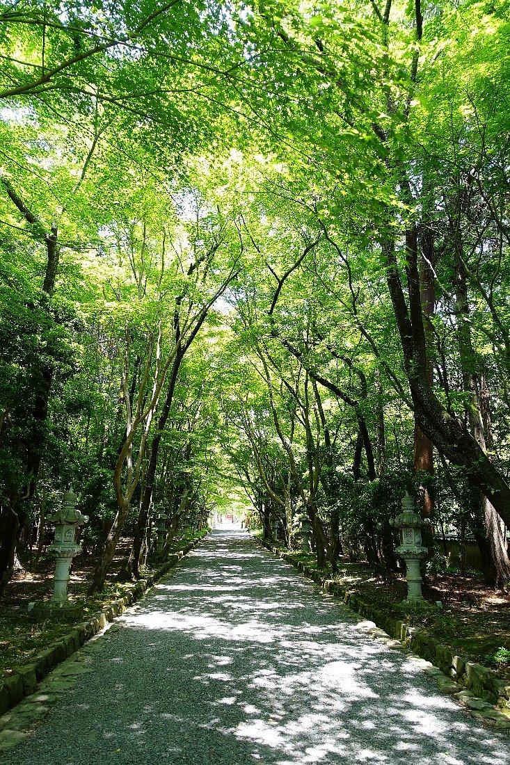 大原野神社(その1)参道で昼食_c0112559_08110209.jpg