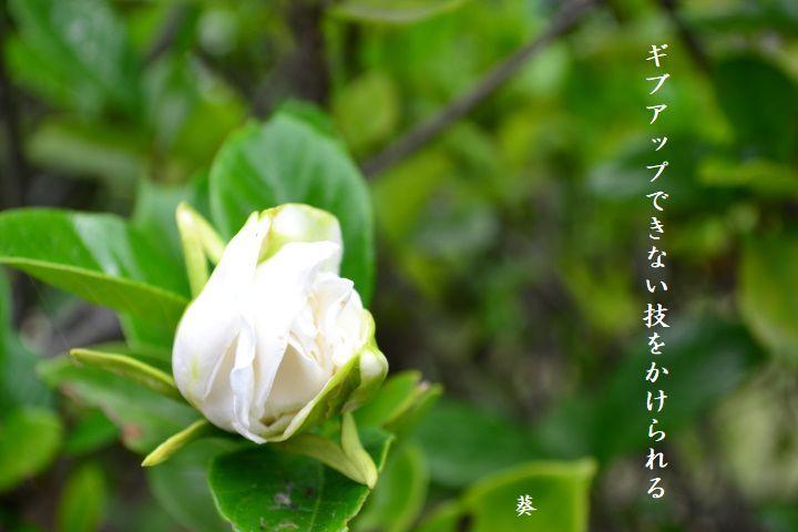 f0379160_15034610.jpg