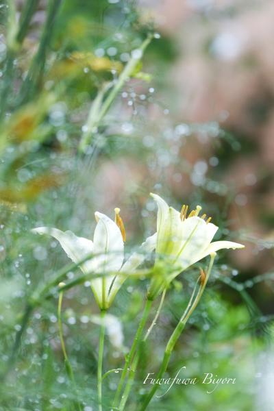 雨上がりの公園 **_d0344864_23291595.jpg