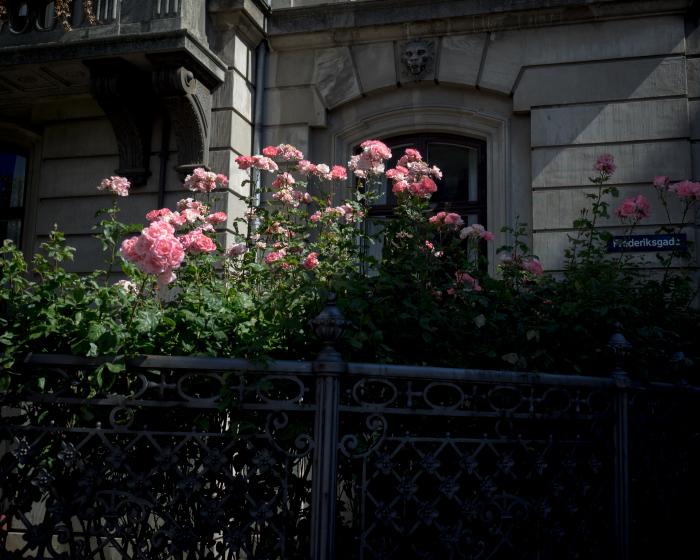 追憶のコペンハーゲン・薔薇の館篇。_b0022268_18561053.jpg