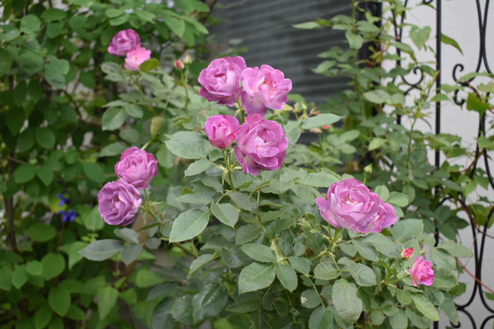 癒やしの庭。_f0098671_08120043.jpg