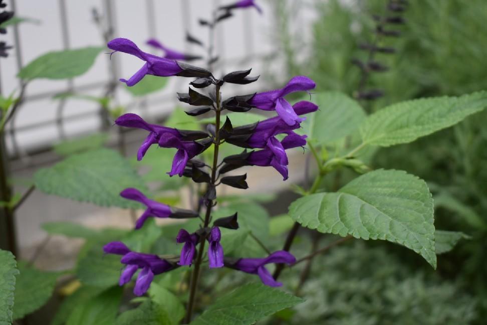 癒やしの庭。_f0098671_08130115.jpg