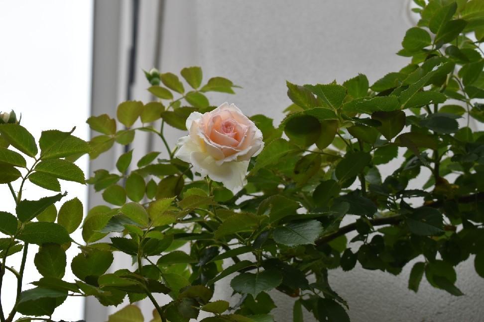 癒やしの庭。_f0098671_08133674.jpg