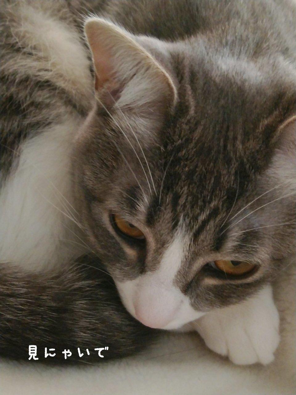 猫には勝てない…_f0255704_15103757.jpg