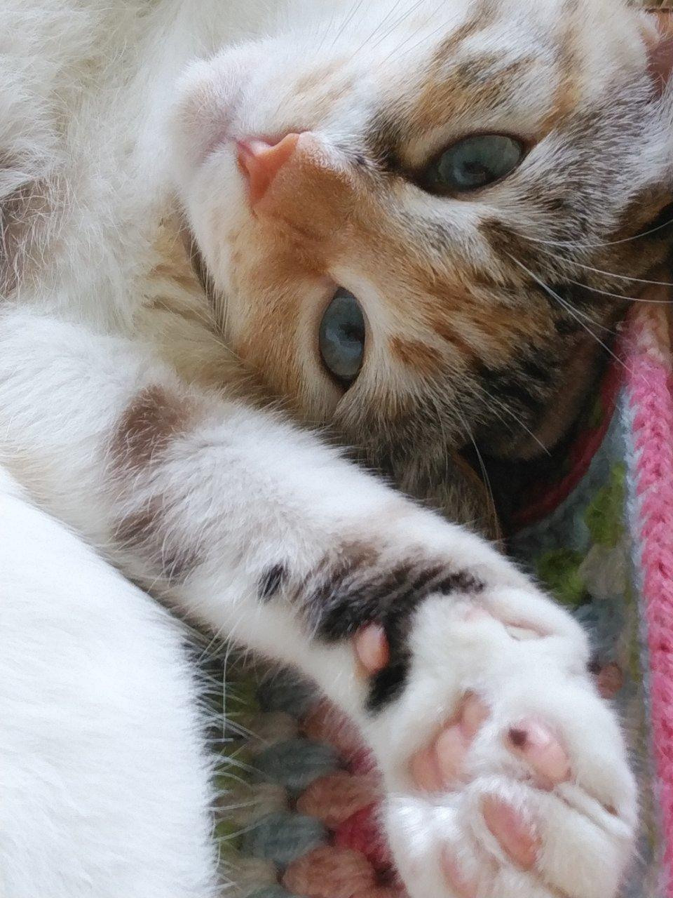 猫には勝てない…_f0255704_15240719.jpg