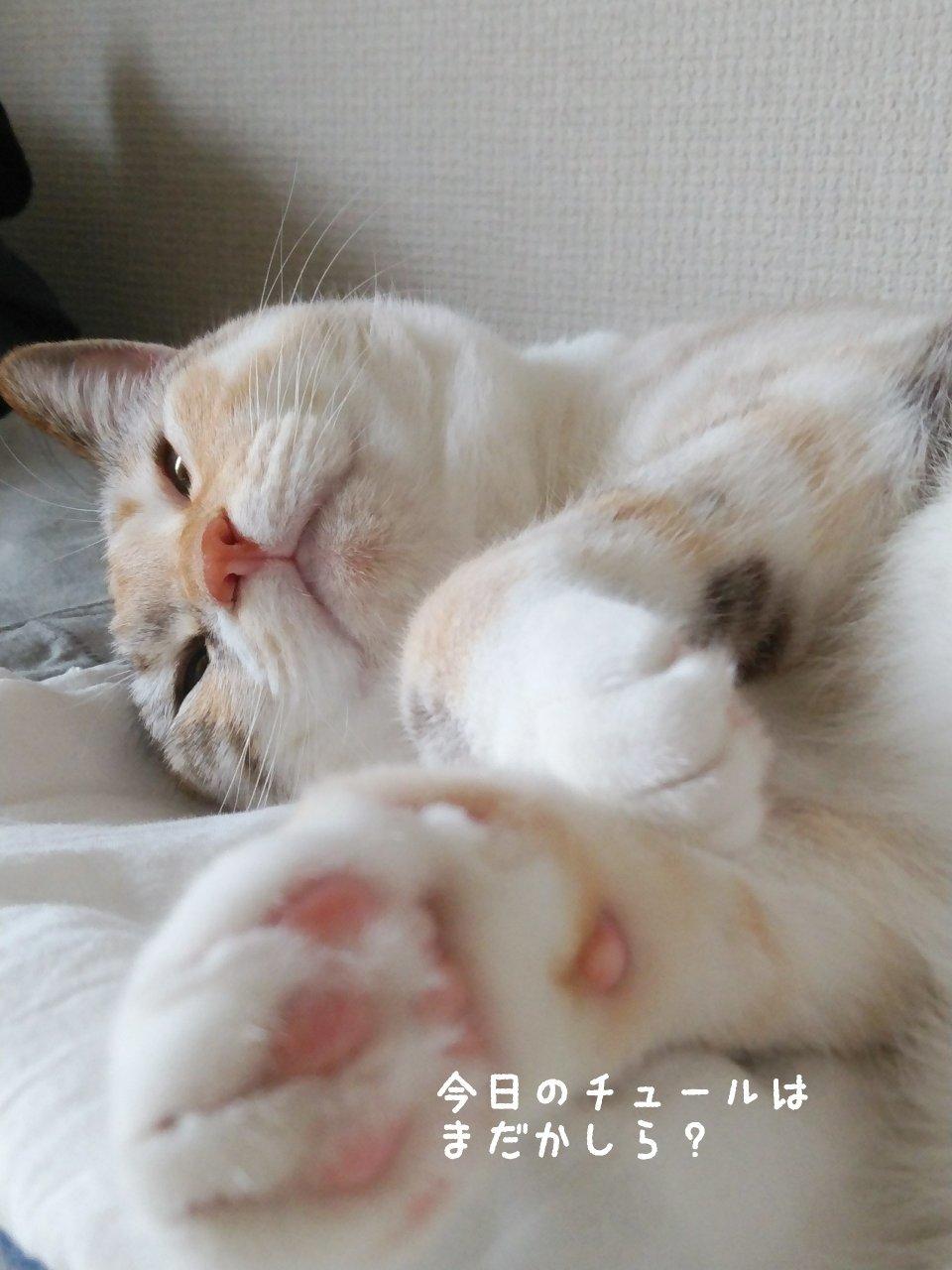 猫には勝てない…_f0255704_15432059.jpg
