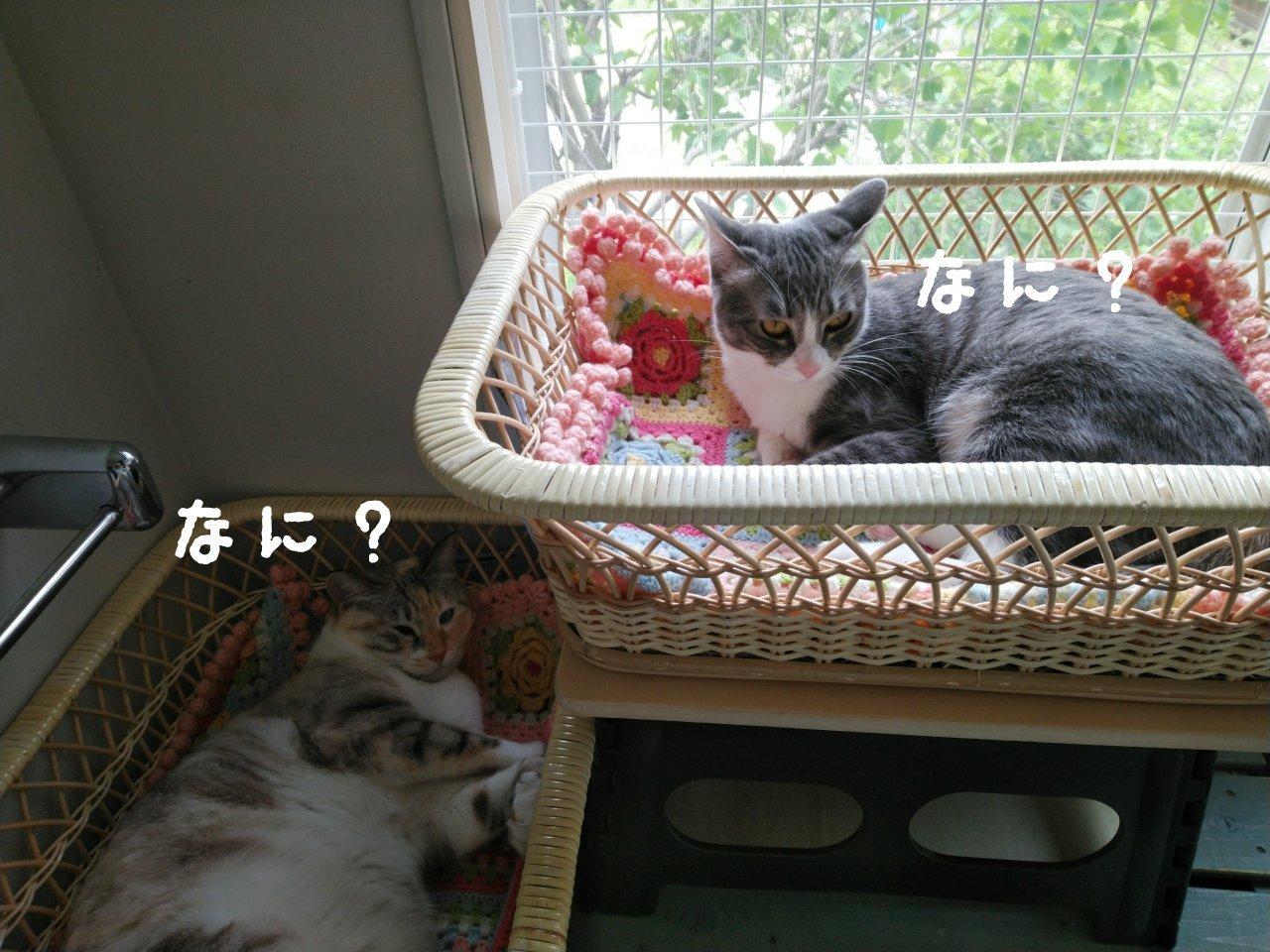 猫には勝てない…_f0255704_15522876.jpg