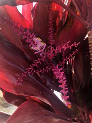 コスタリカのカラフルな自然たち_e0255210_06385645.png