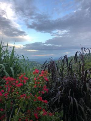 コスタリカのカラフルな自然たち_e0255210_06390738.png