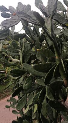 コスタリカのカラフルな自然たち_e0255210_06401008.png