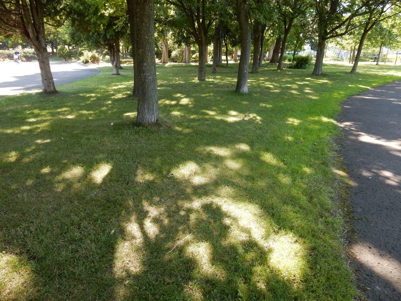 夏日の強い木漏れ日_c0025115_22170818.jpg