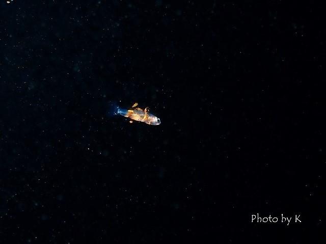 浮遊系ナイトダイブ1_c0211615_12571303.jpg