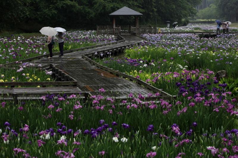 雨の日 傘の日_e0169421_22081054.jpg