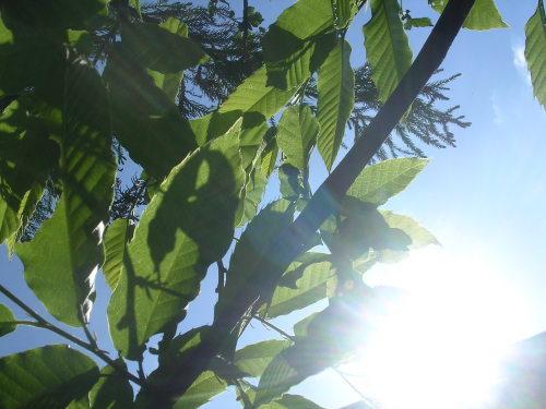 くろもじの木、ほかにもたくさん。_e0295926_19275883.jpg