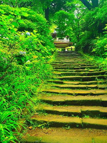 浄智寺 梅雨の巡礼道_a0287533_21105102.jpg
