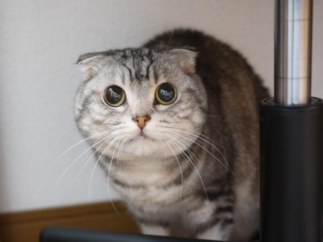 猫のお留守番 まりもちゃん編。_a0143140_23262311.jpg