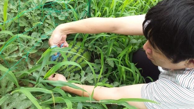 ついにタボ農園収穫!_c0174644_02392895.jpg