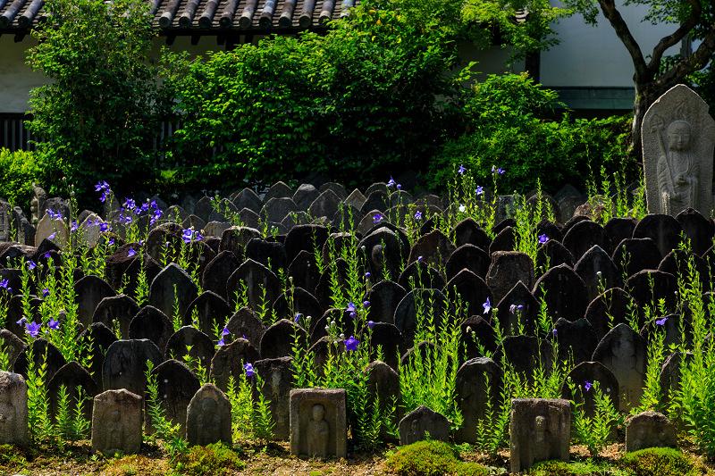 夏の花・蓮と桔梗(元興寺)_f0155048_23362939.jpg