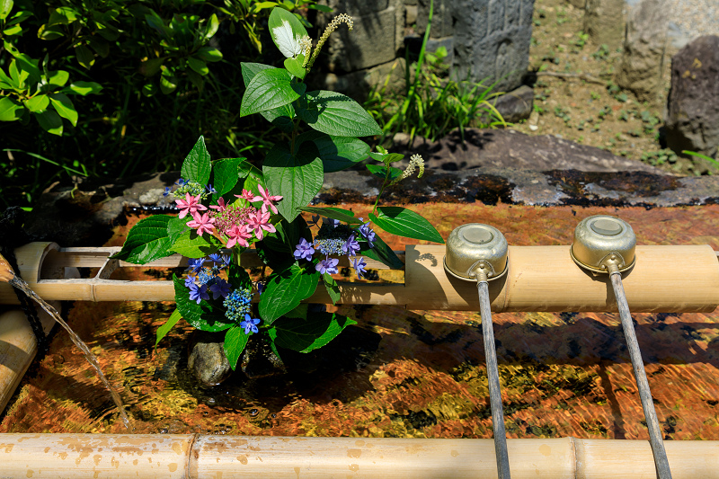 夏の花・蓮と桔梗(元興寺)_f0155048_23385190.jpg