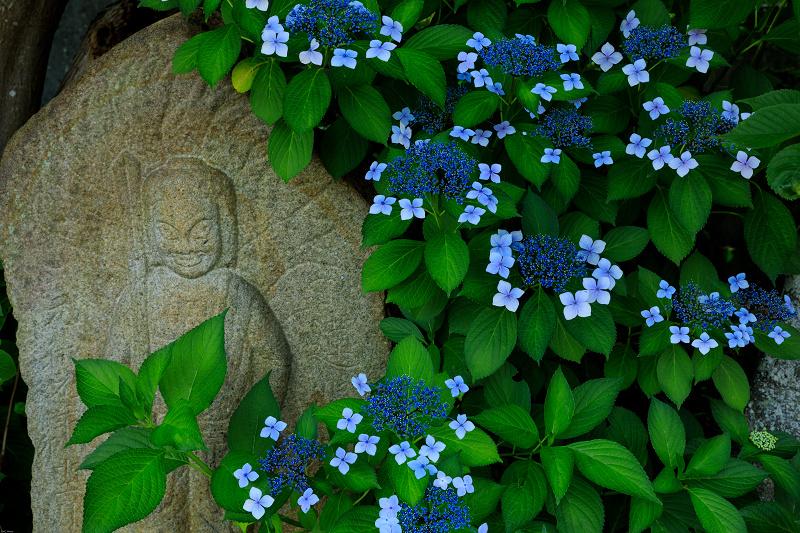 夏の花・蓮と桔梗(元興寺)_f0155048_23395311.jpg