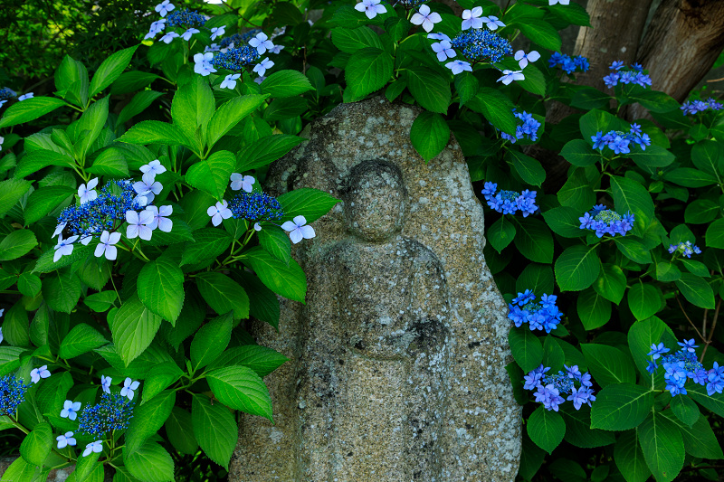 夏の花・蓮と桔梗(元興寺)_f0155048_23395983.jpg