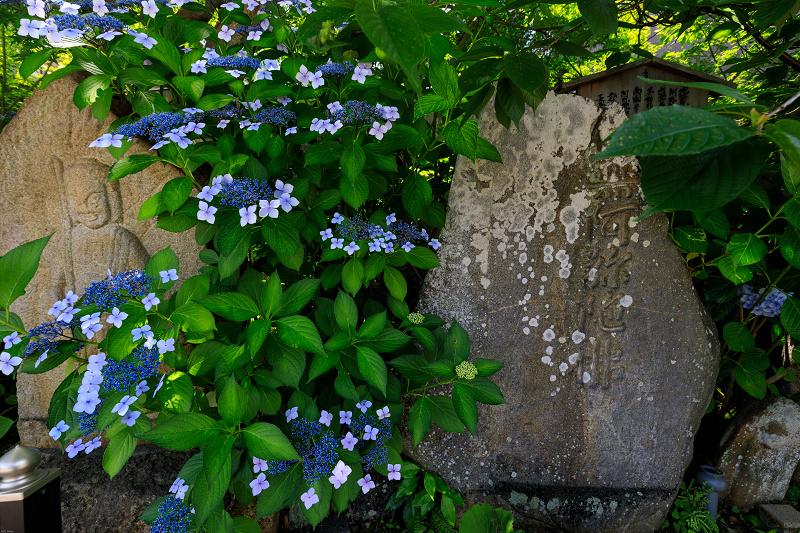 夏の花・蓮と桔梗(元興寺)_f0155048_23403878.jpg