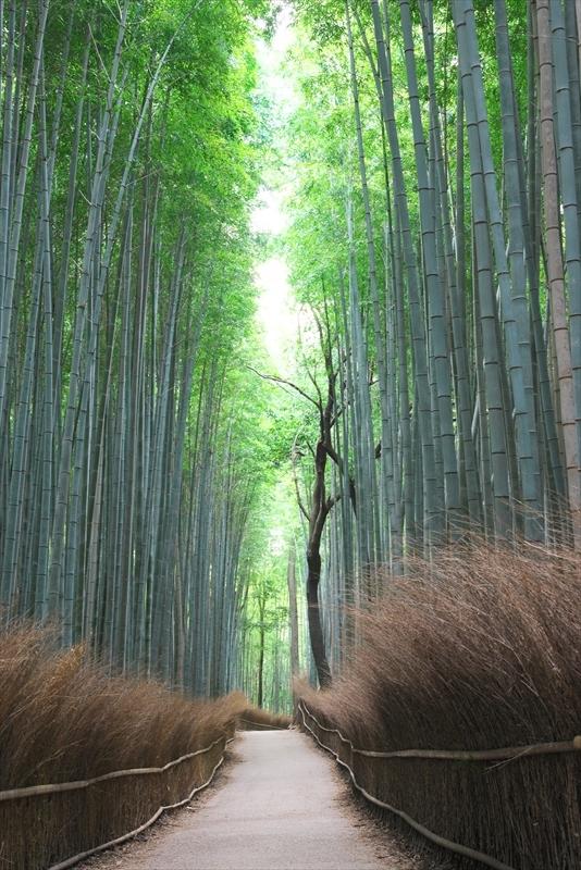 竹林の小径 2_f0018464_16552533.jpg