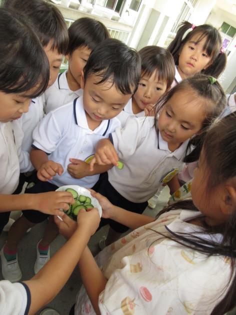 今日の幼稚園はきゅうり祭り!?_b0233868_16073686.jpg