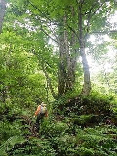 旧徳山村扇谷支流カラカン谷から合セ倉919.9m_e0064783_05191291.jpg