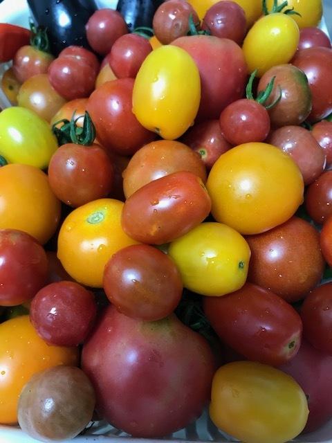 トマト祭り_f0204295_10451874.jpg