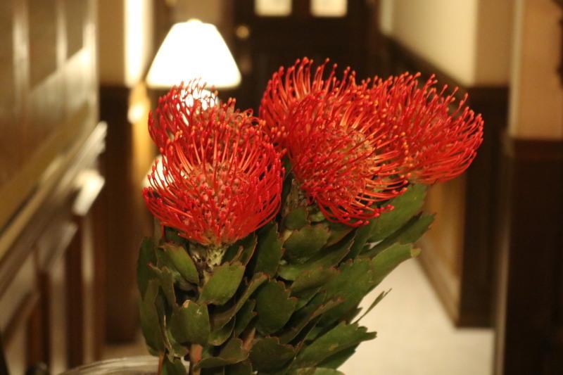 紅い花_f0376195_22130571.jpg
