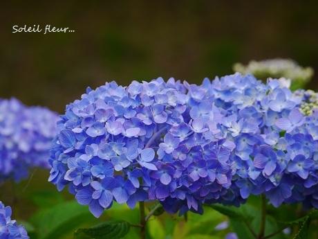 青のハーモニーが聴こえる季節☆_c0098807_16550919.jpg