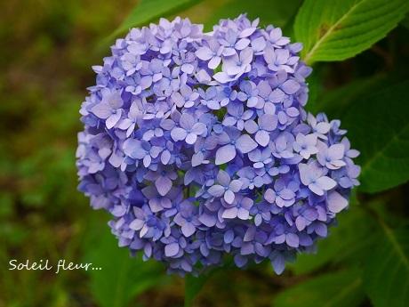 青のハーモニーが聴こえる季節☆_c0098807_16560389.jpg