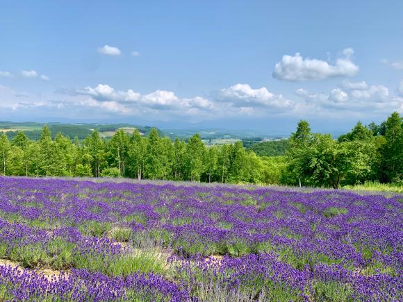 オルテの丘行ってきた。 綺麗だよ〜。 ラベンダーも景色も😊 そして、人少ないのが一番良い😄 一人占めです。_f0096216_16393733.jpg