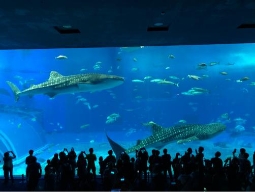 沖縄旅行記#14~念願の!美ら海水族館♪意外に楽しい名護パイナップルパーク♪_f0207146_14022789.jpg