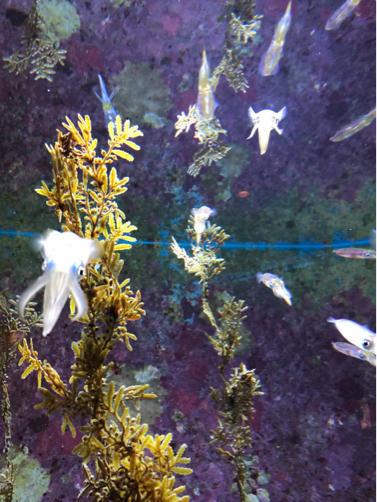 沖縄旅行記#14~念願の!美ら海水族館♪意外に楽しい名護パイナップルパーク♪_f0207146_14030931.jpg