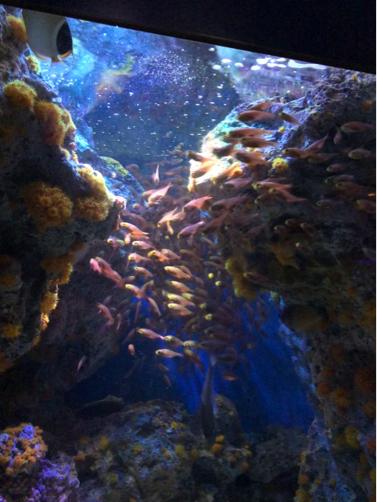 沖縄旅行記#14~念願の!美ら海水族館♪意外に楽しい名護パイナップルパーク♪_f0207146_14030967.jpg