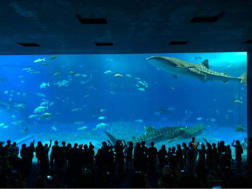 沖縄旅行記#14~念願の!美ら海水族館♪意外に楽しい名護パイナップルパーク♪_f0207146_14031151.jpg