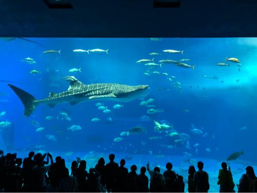 沖縄旅行記#14~念願の!美ら海水族館♪意外に楽しい名護パイナップルパーク♪_f0207146_14042874.jpg