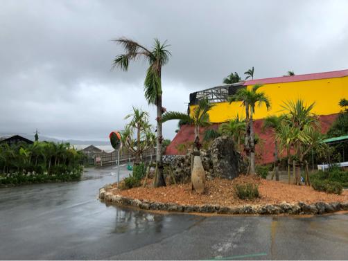 沖縄旅行記#14~念願の!美ら海水族館♪意外に楽しい名護パイナップルパーク♪_f0207146_14042999.jpg