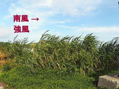 7月10日 南西の風 17m (-_-;)_d0113459_19375003.jpg