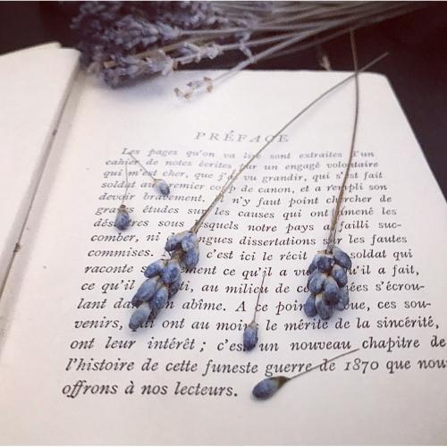 english lavender_f0134670_22180727.jpeg